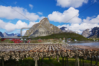 Stock fish in Norway