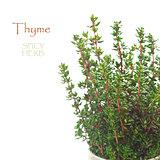 Thyme.