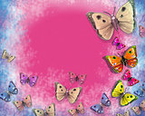 butterflies on pink background