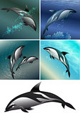 dolphine set