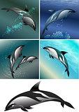 dolphine set
