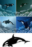 Killer whale set