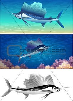 sailfish set