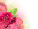 Valentine's Day or Wedding Card Background / Beautiful Roses and