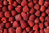 fresh raspberry 
