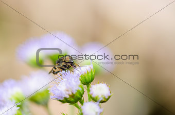 Hoverfly in the nature
