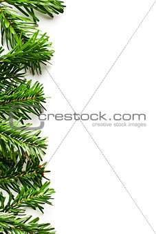 fir branches frame