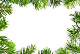 fir branches frame