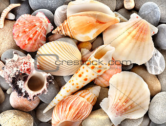 Stone and sea shells