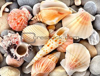 Stone and sea shells