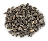 Sunflower seeds isolated