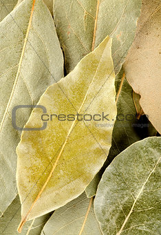 Vertical background with bay leaf