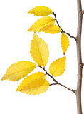 Yellow Autumn Branch