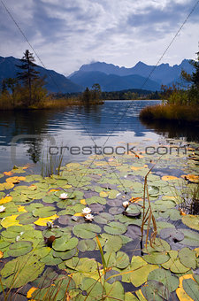 water lily on Barmsee