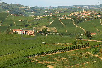 View on vineyards in northern Italy.