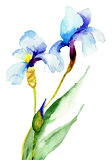 Iris flowers