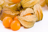 Fresh physalis fruits