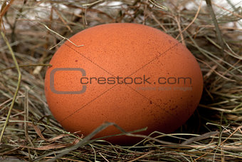 Brown chicken egg in nest