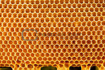 bee honey in honeycomb