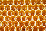 bee honey in honeycomb