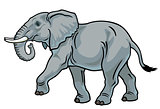 african elephant