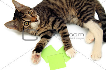 playful tabby kitten lying next to stickers