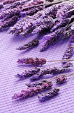 lavender flowers