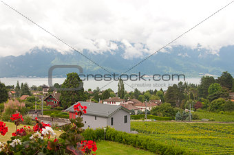 Houses and Geraniums amidst Vineyards