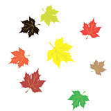 composition of autumn leaves . Vector illustration