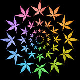 Circle frames of colorful leaves isolated on black.