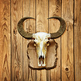 Buffalo skull on wooden wall