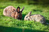 Two easter rabbits on fresh green grass on beautiful sunny day