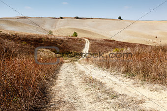 Scenic Road in Tuscan Countryside near Montalcino, Tuscany, Ital
