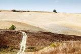 Scenic Road in Tuscan Countryside near Montalcino, Tuscany, Ital