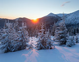 Sunrise winter mountain landscape with fir trees.