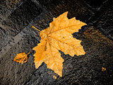 Autumn bright leaf