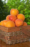 apricot basket