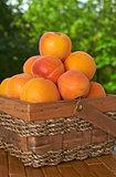 apricot basket