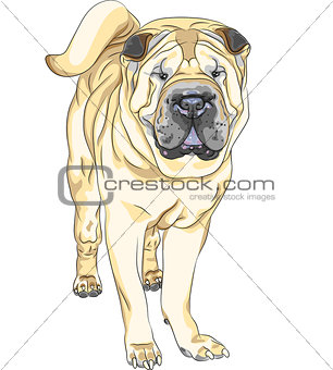 vector sketch yellow gun dog breed Chinese Shar Pei
