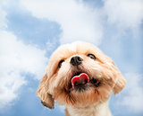 close up of dog face with cloud background