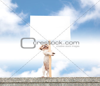 happy dog standing on the wall and showing blank billboard