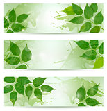 Three nature background with green spring leaves. Vector illustr
