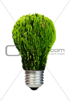 Lamp made €‹of green plants. Ecology conception
