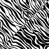 vector abstract skin texture of zebra