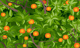 tangerine seamless