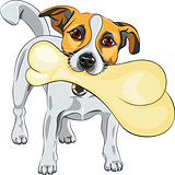 vector dog Jack Russell Terrier keeps the bone