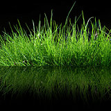 green gras