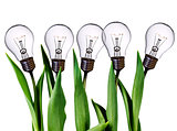 lamp bulb tulips