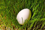 egg on green grass