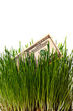 banknote dollar in green grass